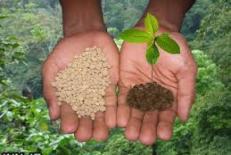 دانلود مقاله  مصرف بهینه کودهای شیمیایی در تحقق تولید محصول