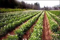 دانلود مقاله شناخت دانش بومي و كاربرد آن در کشاورزی زیستی