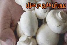 دانلود مقاله پرورش قارچ در منزل